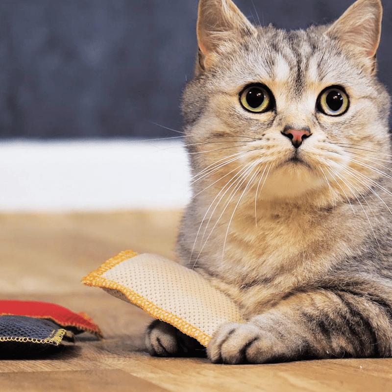 Premium Schmusekissen von 4cats mit Katze