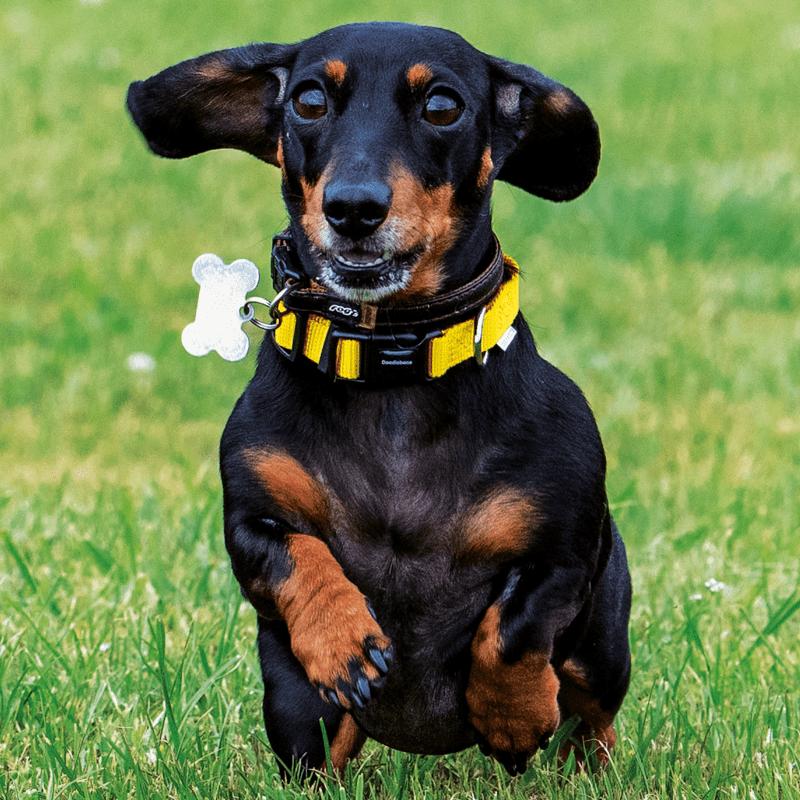 Bold Halsband mit Hund von Doodlebone®