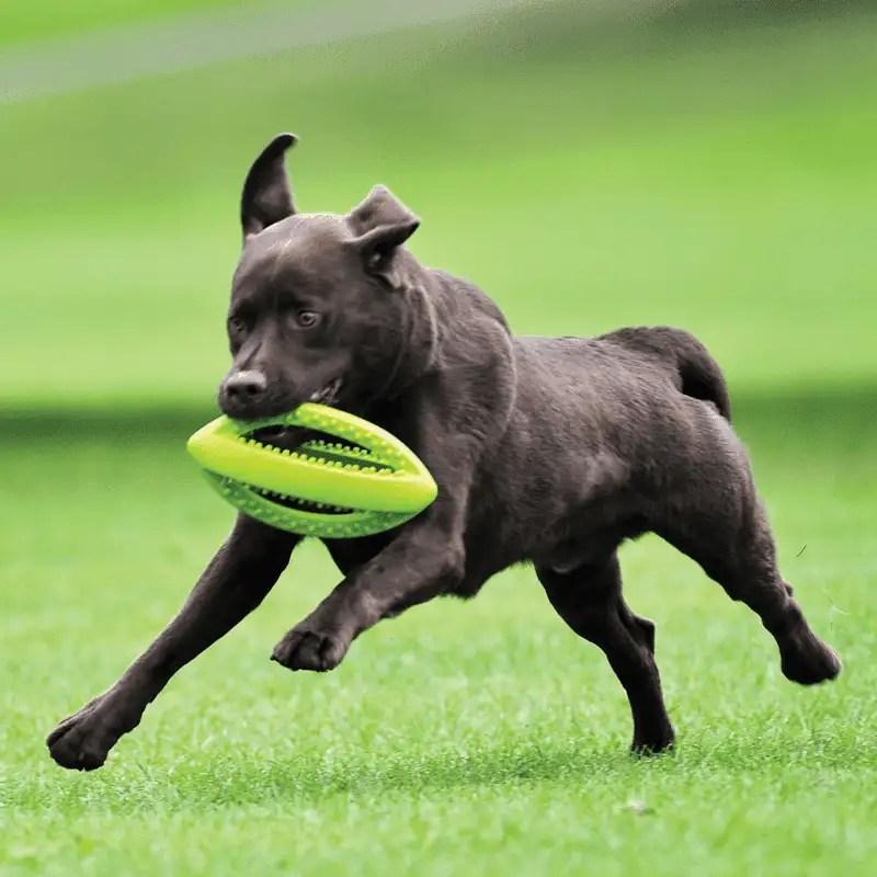Grubber interaktiver großer Rugbyball von Happy Pet mit spielendem Hund