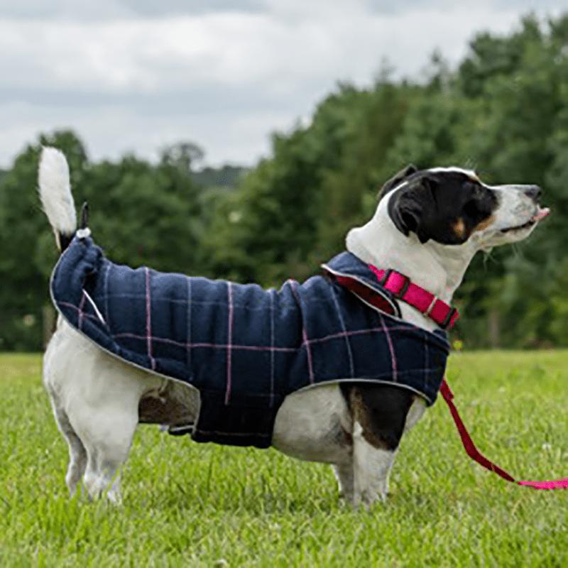 Hund mit blauer Tweedy-Hundejacke (Wendejacke) von Doodlebone®
