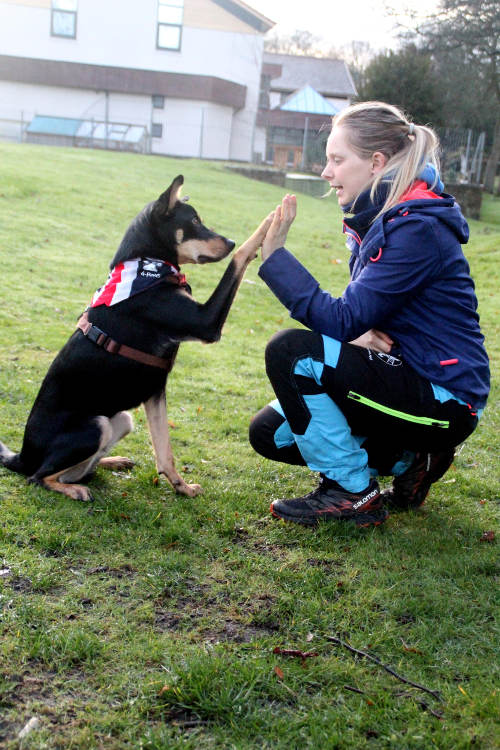 dog high five teamwork with owner