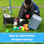 Hvalpetræning & Lifeskills Starter-hold