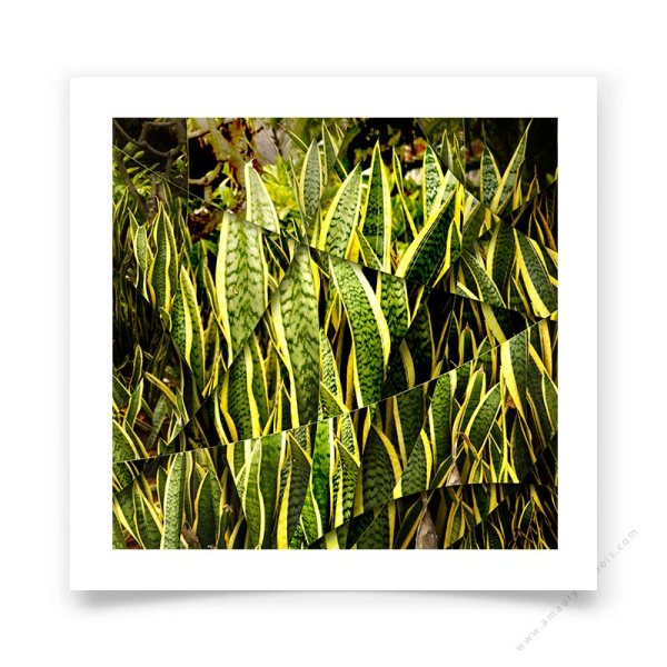 Plante -agave- Photo d'art contemporaine en édition signée