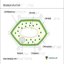 braille science cell structure