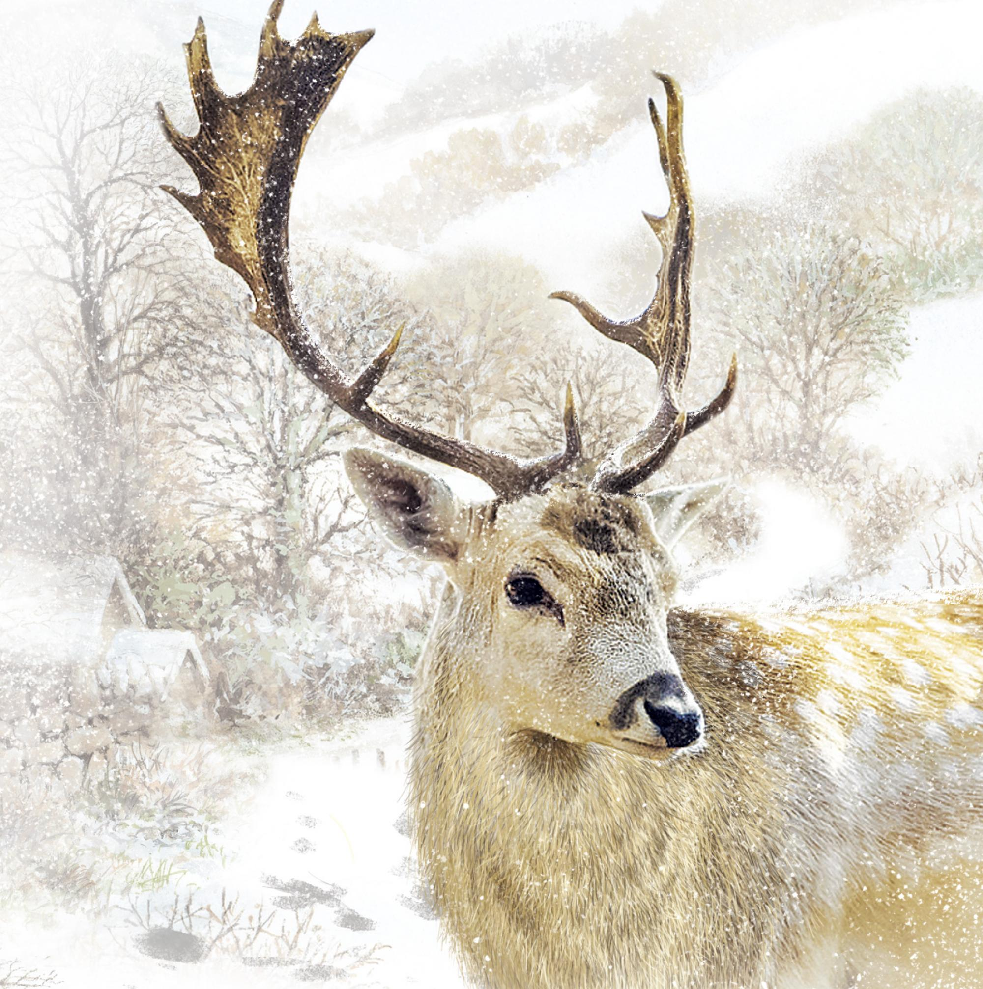 Solitary Stag Christmas Card Pack Of 10 Cancer