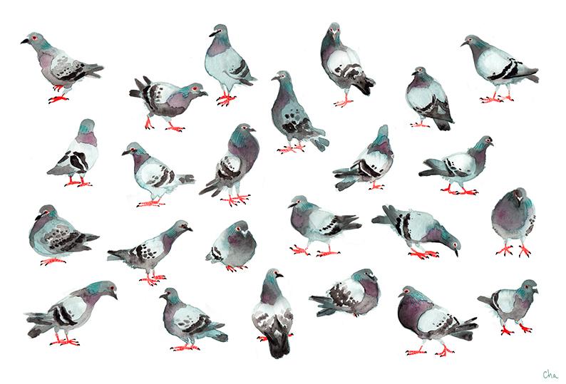 Art print pigeons