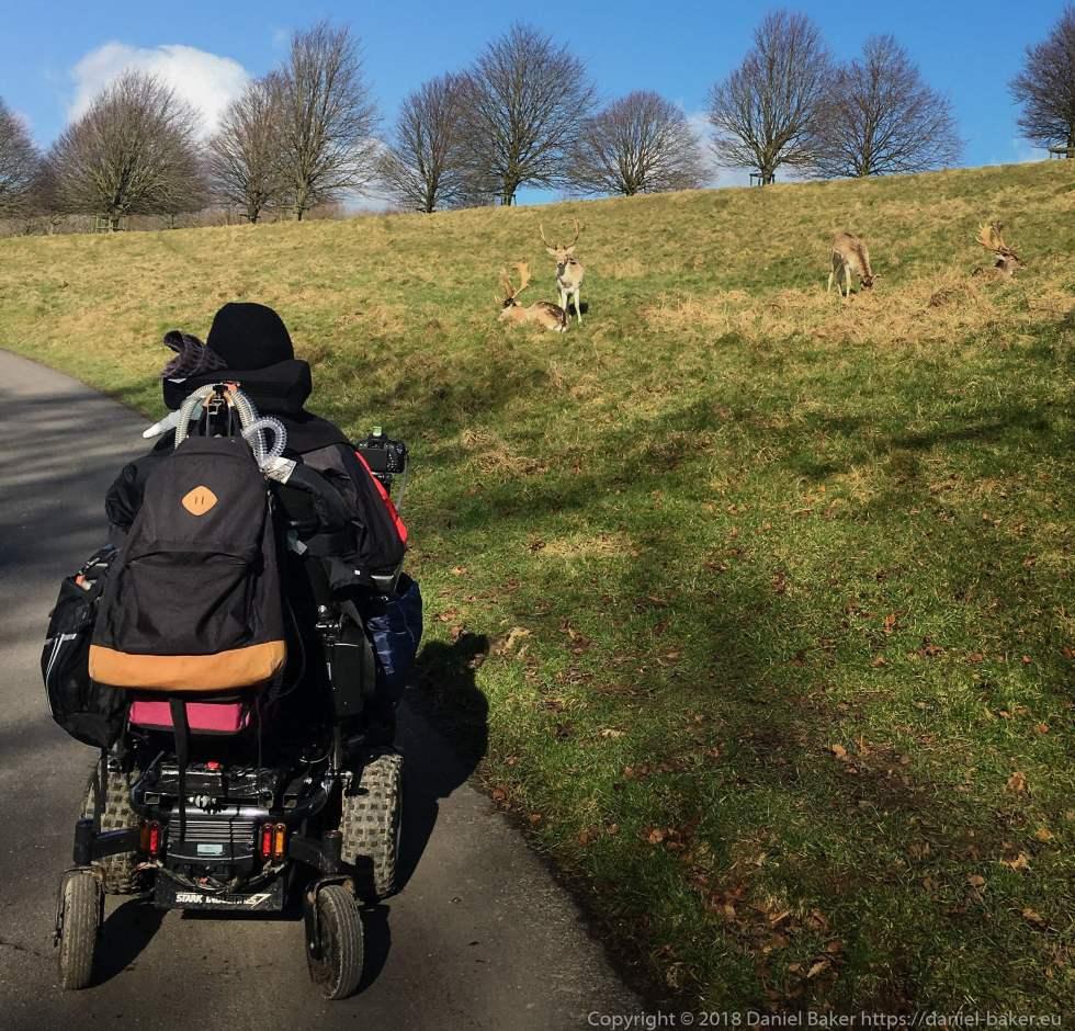 Daniel Baker taking a photograph of some deer at Dyrham park