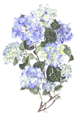 Blue Hydrangeas A4 (Medium) embroidery panel, ready to embroider