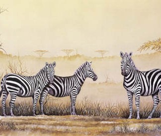 Burchell's Zebra - A3 (Large) embroidery panel, ready to embroider