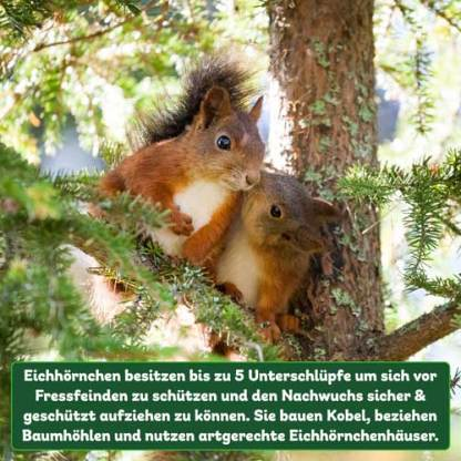 Eichhörnchenhaus Unterschlupffakt