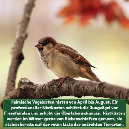 Vogelnistkasten Fakt