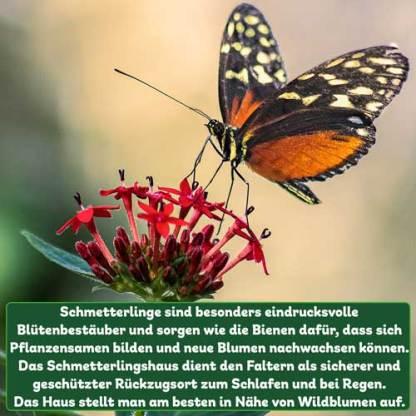 Schmetterlingfakt
