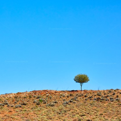 Lone tree on rocky outcrop photographed with big blue sky. Excitations beginners photography course.