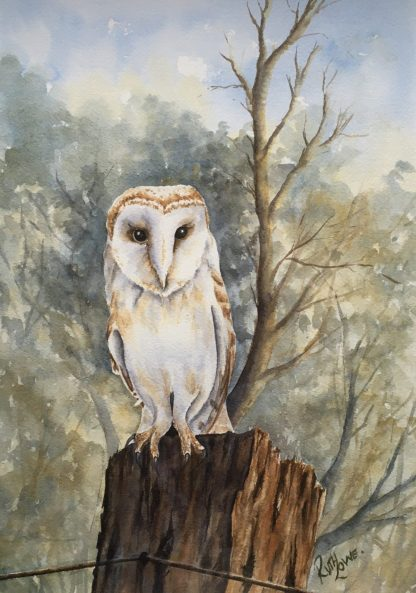 Barn Owl Cropped