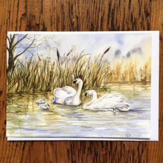 Swans & Cygnets