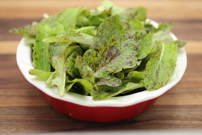 Bowl of Flashy Green Butteroak Lettuce