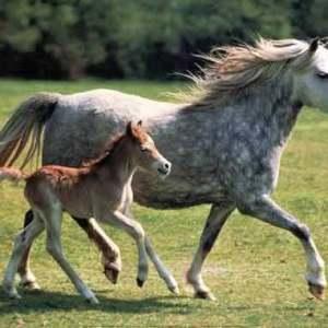 paard-en-veulen
