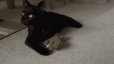 nubia-and-4cats-toy