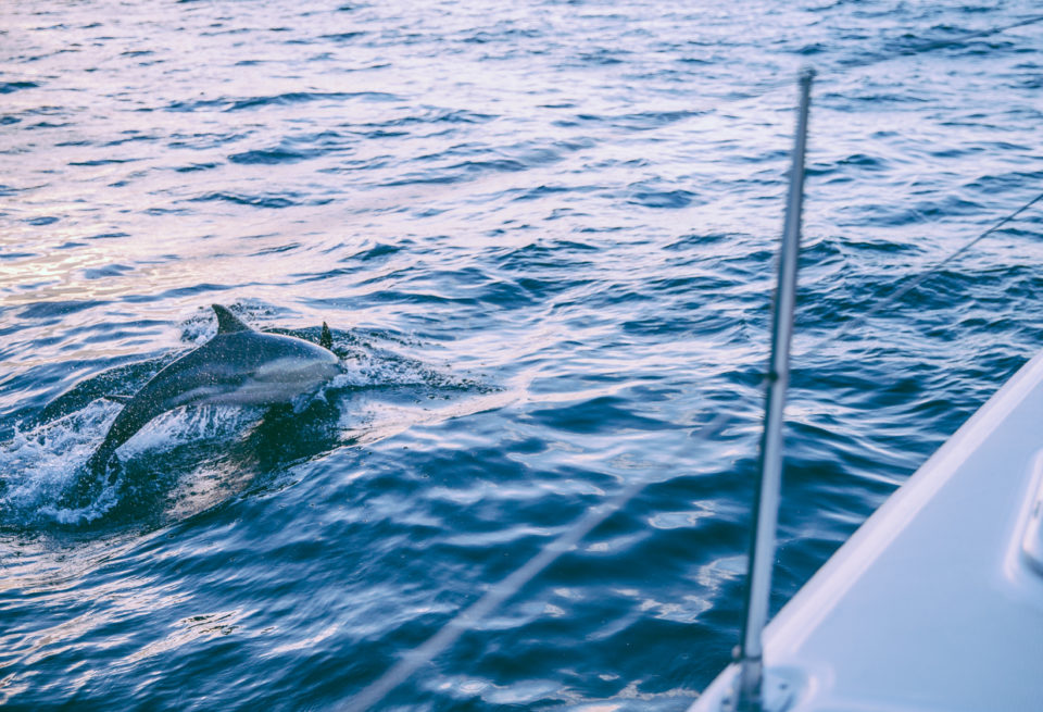 Boat sailing with dolphins