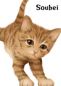 そうへい用可愛い虎猫子猫