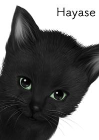 はやせ用可愛い黒猫子猫