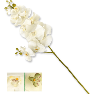 CHA 41611 STELO ORCHID.SUP. 90CM 12/48 2COL. ASS.