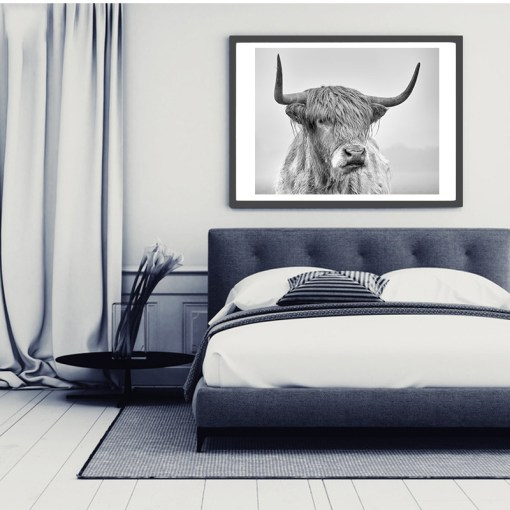 Gazing Highland Cow Black And White Print Frameless Poster