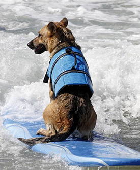 Dog Life Jacket Summer