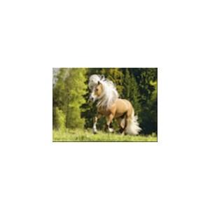 Pferdeglück-1000 Teile | Ravensburger Spielverlag