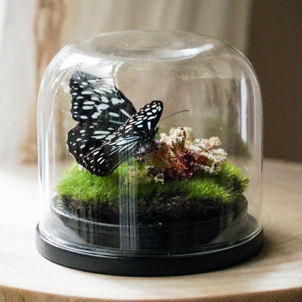 Blue Butterfly Terrarium