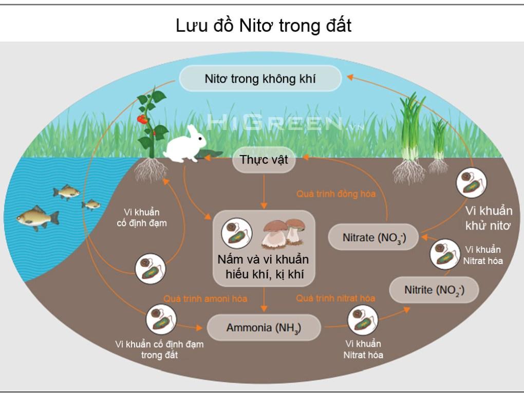 Chương 2: Kiến thức về Aquaponics Lưu đồ Nitơ trong đất