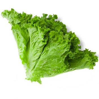 Fresh Vegetables Lettuce – Leafy