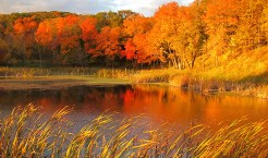 maplewood-state-park-fall-colors_690-pixels