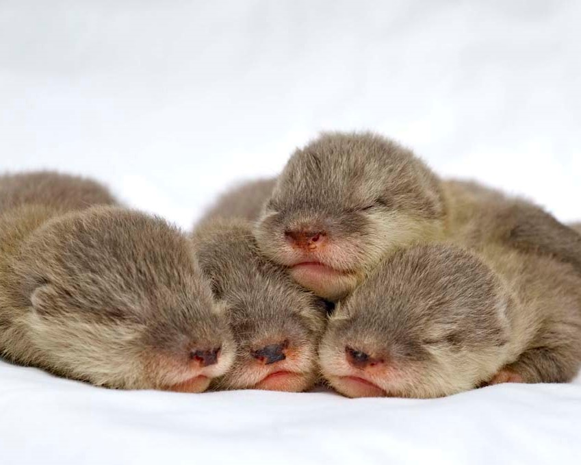 Baby Otterbaby Animalsmost Adorable Baby Animalscute Baby Animal