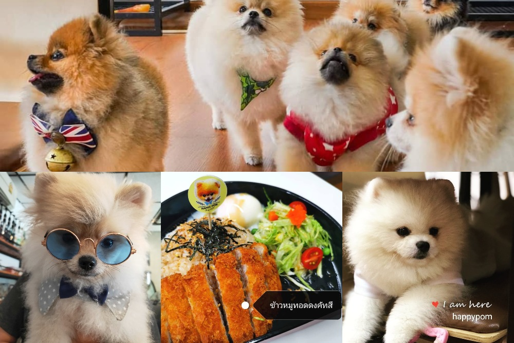 Happy-pom-dog-cafe