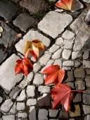 Herbst mit Laubblättern aels27