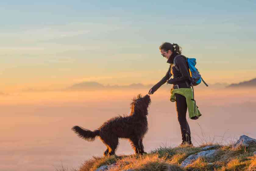 Outdoor Activities That You Can Enjoy With Dog