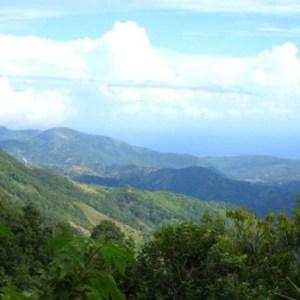 Koffiebonen Jamaica Blue Mountain
