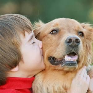 כלבים וחיות מחמד