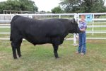 Beef steer for sale during summers- This steer graded Choice!!