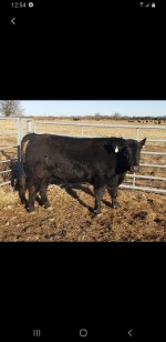 B & B Cattle Co