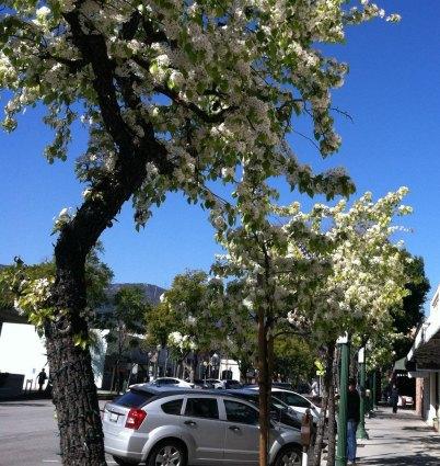 32-Montrose Shopping Park Glendale CA