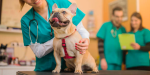 Orland Park Small Animal Clinic