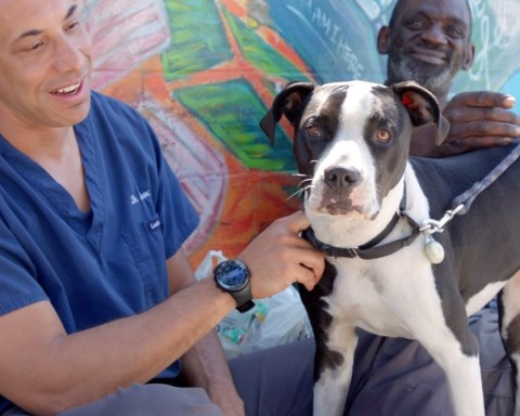 black veterinarian