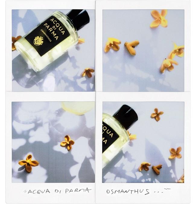 ACQUA DI PARMA • L'art du parfum, sans cesse renouveller