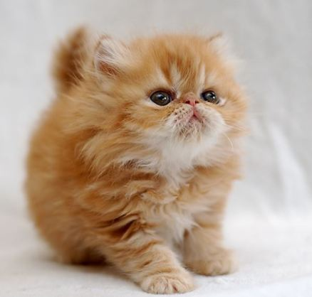 Figured no one wanted to see a photo of diapers, so here is another picture of an adorable kitten instead.
