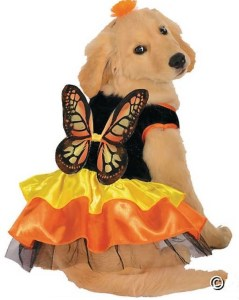 Did you know that dogs wish they could fly? Help your sweet puppy fulfill her fairy fantasy with this coordinating Butterfly Dog Costume. orientaltrading.com.