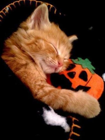 Halloween is about the kids. Help to create special childhood memories for your neighborhood Trick-or-Treaters by handing out safe, special treats and trinkets that they will love. Photo via cuteanimalpicturesandvideos.com.