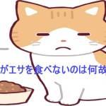 猫 餌を食べない