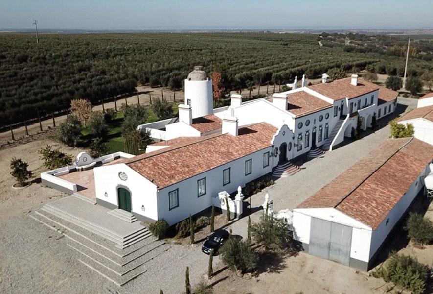 Herdade Maria da Guarda planta mais 120 mil oliveiras e bate novo recorde de produção